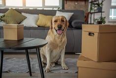 Славная собака размещая в широкой квартире стоковая фотография