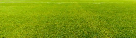 Славная текстура зеленой травы стоковая фотография