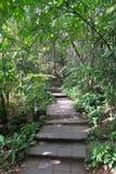 Славная тропа через зеленый лес, Таиланд Стоковые Изображения