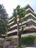 Славное дерево около жилых домов в EUR Риме стоковое изображение rf