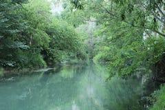 Славное река в лесе стоковое фото rf