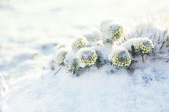 Славное snowdrop в долине высокой горы Стоковое фото RF