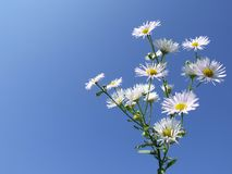 Славные белые цветки стоковые изображения rf