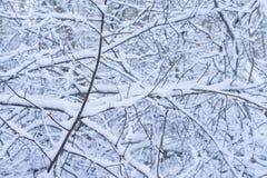 Славные детали деревьев и ветви с белым снегом, заморозком и льдом Стоковое фото RF