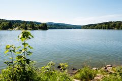 Славный берег озера с травой, деревьями и утесами в воде Стоковое Фото