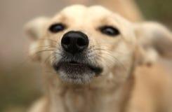 Славный добросердечный doggy Стоковые Изображения