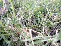 Славный, зеленый, поле Стоковое фото RF