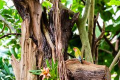 Славный красочный попугай с зеленым и желтым цветом садился на насест на worn ветви стоковая фотография