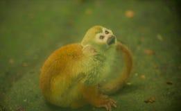 Славный малый желтый осел с глазами cyr Стоковые Фото