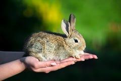 Славный малый кролик в женских руках стоковые изображения