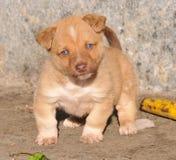 славный щенок Стоковая Фотография