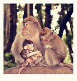 Сладкая сработанность - обезьяна в Бали стоковое фото rf