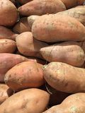 Сладкие картофели, естественно сладостный овощ корня стоковые изображения
