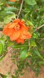 Сладкий красный цветок стоковая фотография rf