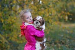 Сладостная девушка держит малое tzu shih щенка Стоковые Фотографии RF