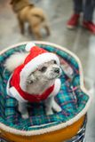 Сладостная собака с взглядом платья Санта Клауса что-то Стоковые Фото