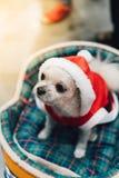 Сладостная собака с взглядом платья Санта Клауса что-то Стоковое Фото