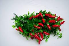 Сладостное kapi красного перца, 3 перца на белом деревянном столе, перце, chile, изолированных чилях, горячий, красный, пряный, ц Стоковая Фотография