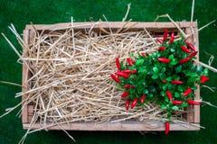 Сладостное kapi красного перца, 3 перца на белом деревянном столе, перце, chile, изолированных чилях, горячий, красный, пряный, ц Стоковые Фото