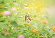 Сладостные бабочка и цветок Стоковое Изображение