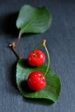Сладостные вишни на лист Стоковая Фотография