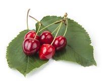 Сладостные красные вишни на лист и белой предпосылке Стоковое Изображение RF
