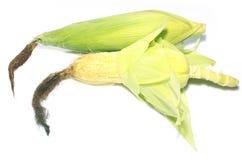 Сладостные corns на белой предпосылке Стоковое Изображение