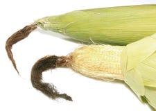 Сладостные corns на белой предпосылке Стоковые Изображения