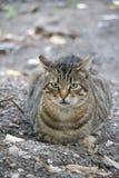 Сладостный голодный кот стоковая фотография rf