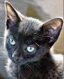 Сладостный черный котенок Стоковые Фото