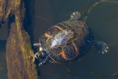 Слайдер пруда Стоковое Фото