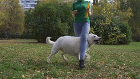 Слалом собака сток-видео