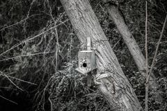 слегка ударенный над старым домом птицы в дереве Сад Баку Азербайджана ботанический Стоковое Изображение