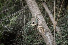 слегка ударенный над старым домом птицы в дереве Сад Баку Азербайджана ботанический Стоковые Изображения RF
