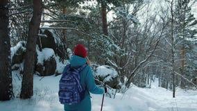 СЛЕДОВАТЬ молодым женским пешим туризмом с рюкзаком в красивых ручках польз леса зимы для нордический идти видеоматериал