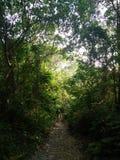 следовать путем и идите прямо стоковое фото rf