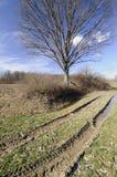 следы грязи стоковое фото rf