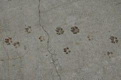 Следы животного лапок собаки стоковая фотография rf