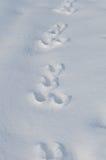 Следы зайца на снежке Стоковые Изображения