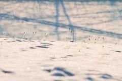 Следы зимы Стоковое Изображение