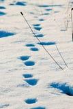 Следы зимы Стоковая Фотография