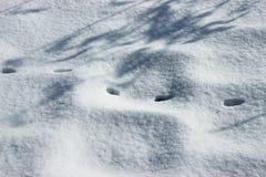 Следы кота в ландшафте снега Стоковые Фотографии RF