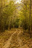 Следы леса Стоковая Фотография RF