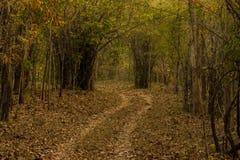 Следы леса Стоковые Фото