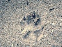 Следы ноги большой собаки на песке приставают к берегу прогулка утра Стоковые Изображения