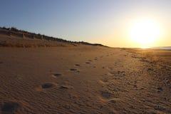 Следы ноги вышли в песок на песочном прибрежном пляже океана Стоковое Изображение RF