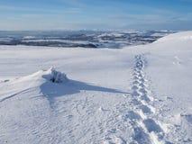 Следы ноги в снеге на солнечный день в Шотландии стоковые изображения
