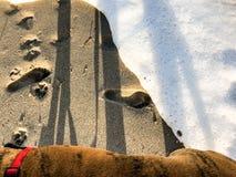 Следы ноги и печати лапки на песке Стоковое Изображение RF