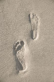 следы ноги пляжа Стоковые Изображения RF