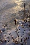 Следы ноги птицы в снежке стоковые фото